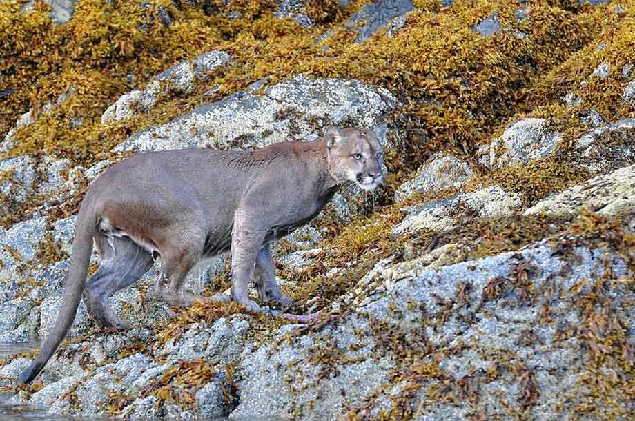 site cougar 100 gratuit parksville